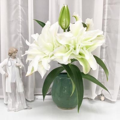 今週のお花(カサブランカ)